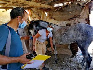 visite chevaux  calèches