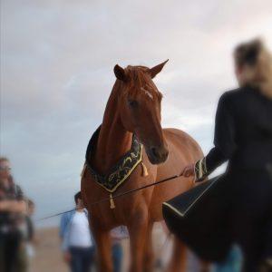 Equestrian show Terre des Etoiles Désert d'Agafay